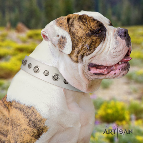 American Bulldog awesome full grain leather dog collar with decorations for basic training