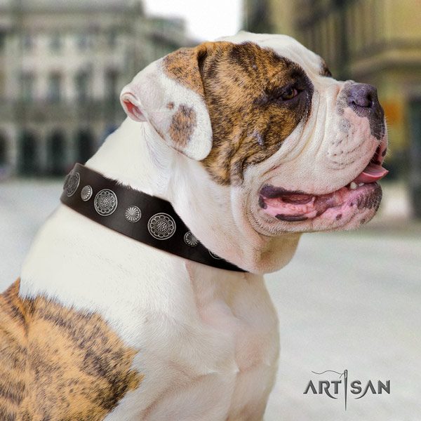 American Bulldog exquisite genuine leather dog collar with adornments for handy use