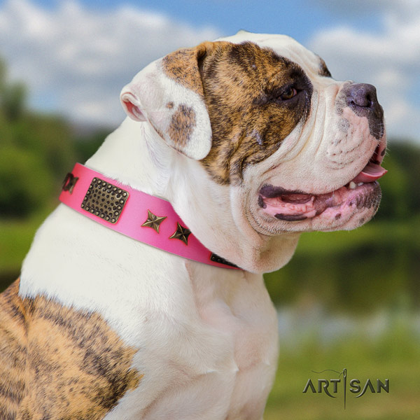 American Bulldog amazing full grain leather dog collar with adornments