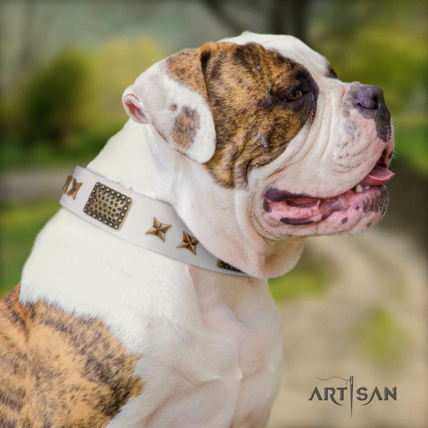 American Bulldog incredible full grain leather dog collar with adornments