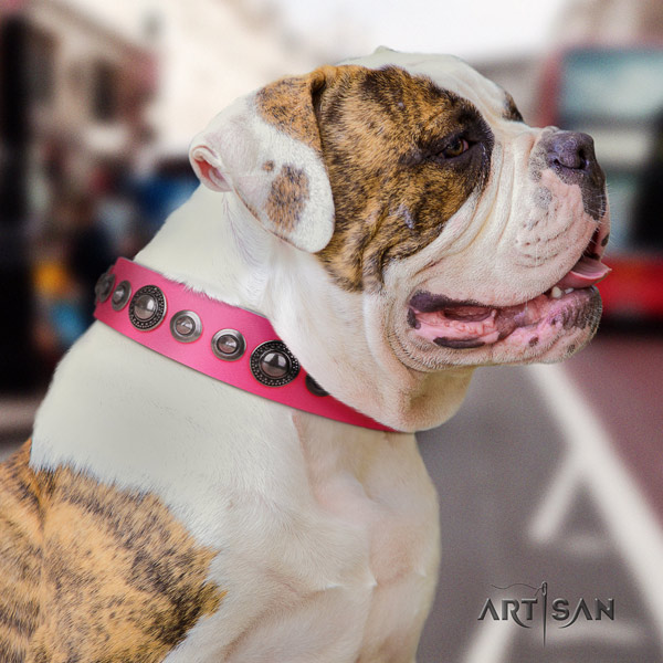 American Bulldog inimitable genuine leather dog collar with embellishments
