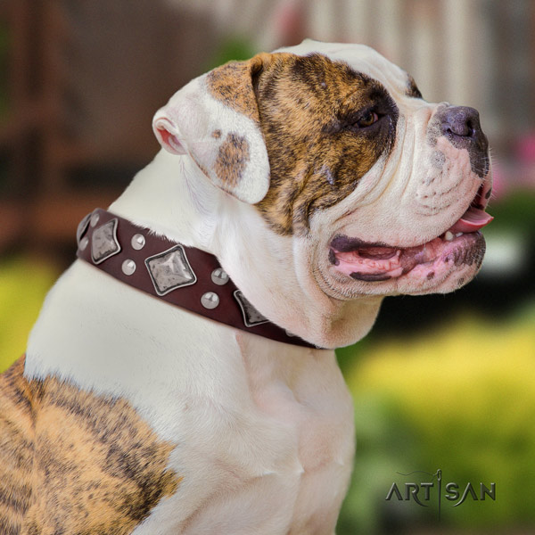 American Bulldog incredible leather dog collar with adornments