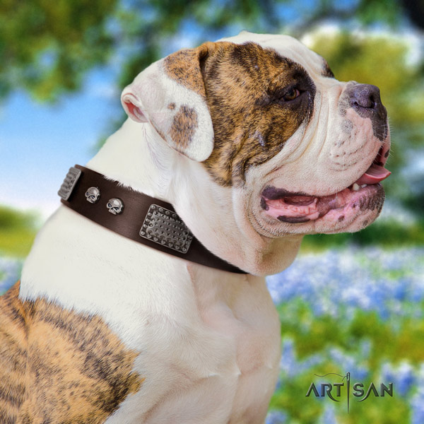 American Bulldog significant full grain leather dog collar with decorations for stylish walking