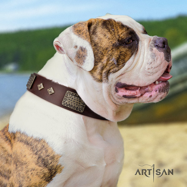 American Bulldog stylish leather dog collar with studs for walking