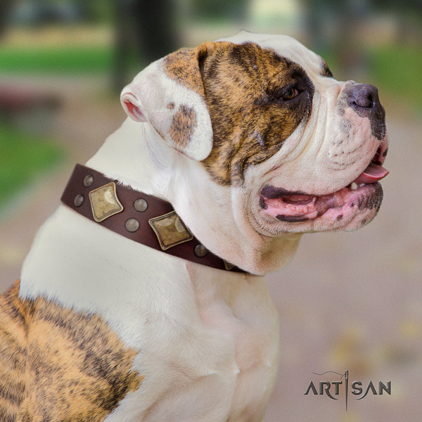American Bulldog trendy leather dog collar with studs