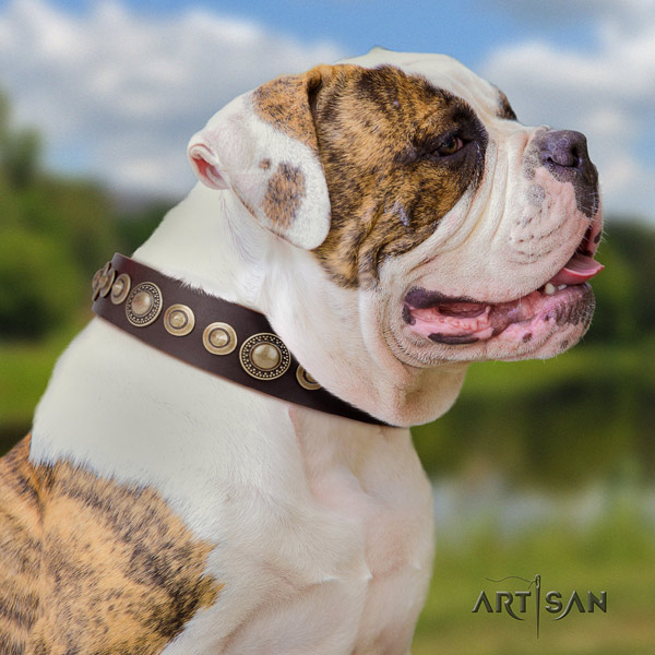 American Bulldog extraordinary genuine leather dog collar with decorations