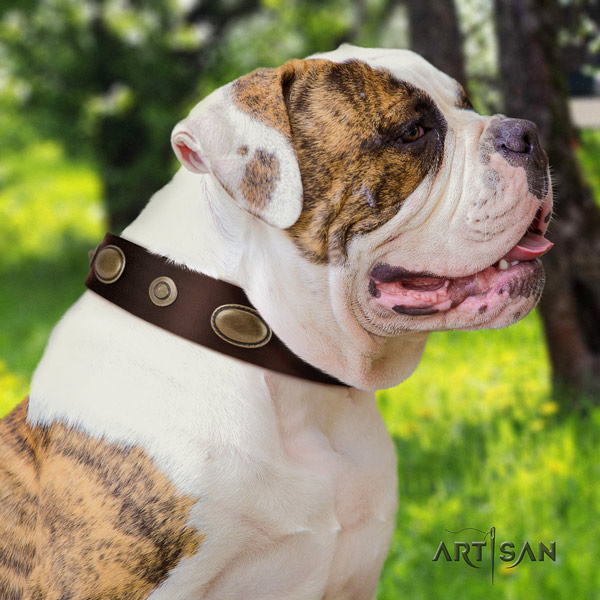 American Bulldog unique leather dog collar with embellishments for fancy walking