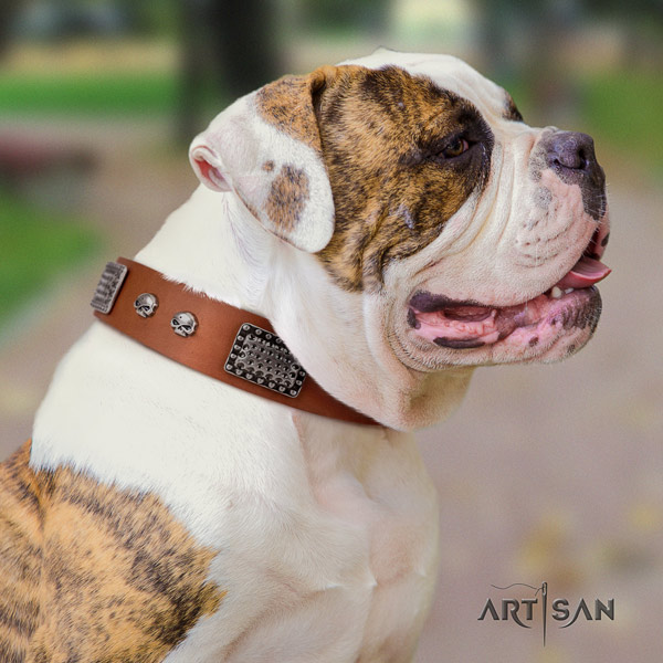 American Bulldog remarkable genuine leather dog collar with embellishments for everyday use