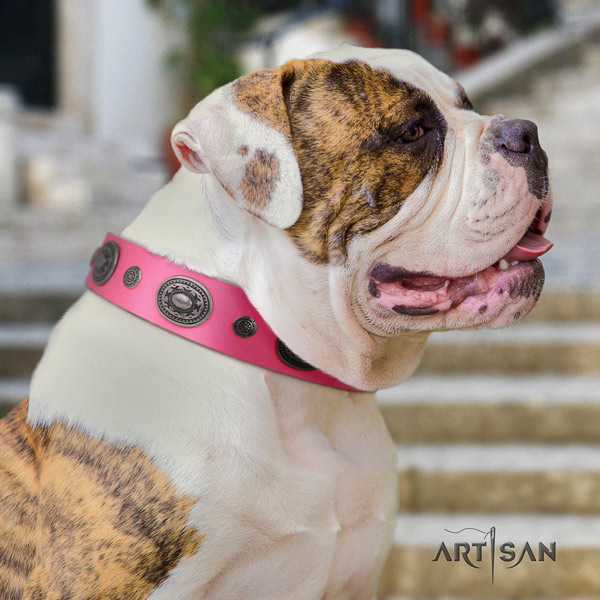 American Bulldog extraordinary leather dog collar with decorations