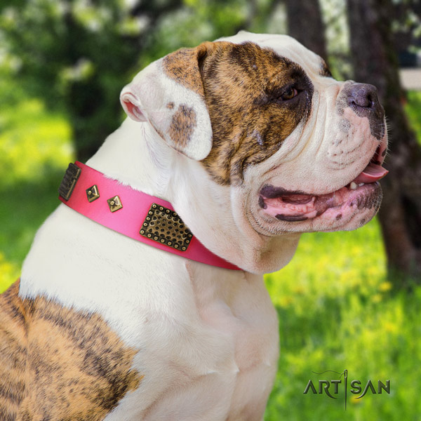 American Bulldog stylish design leather dog collar with studs for comfortable wearing