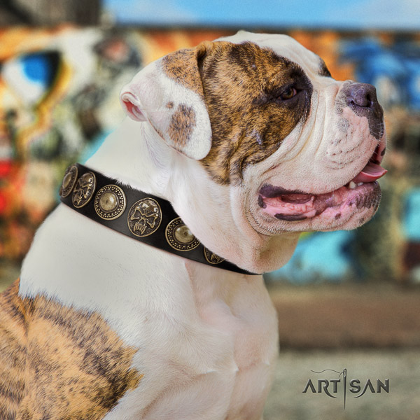 American Bulldog walking leather collar with decorations for your doggie