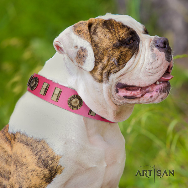 American Bulldog everyday use leather collar with stylish design embellishments for your doggie