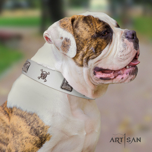 American Bulldog everyday use full grain leather collar with significant adornments for your four-legged friend