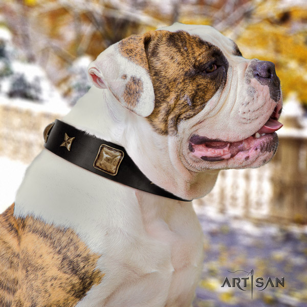 American Bulldog daily use leather collar with decorations for your four-legged friend