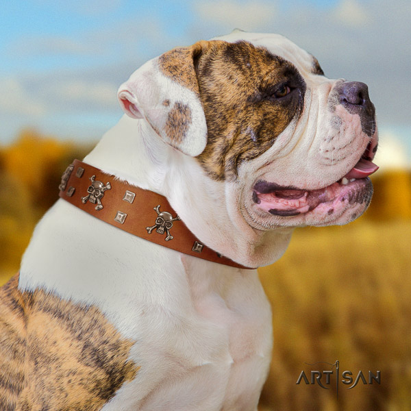 American Bulldog fancy walking leather collar with stylish design studs for your canine
