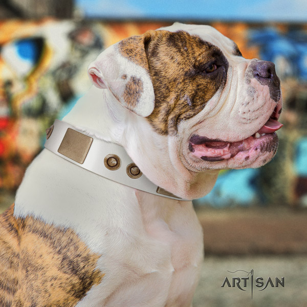 American Bulldog fancy walking genuine leather collar with studs for your doggie