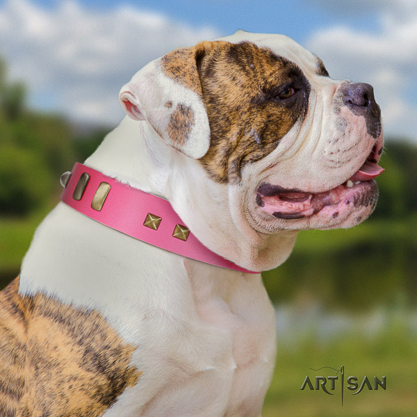 American Bulldog fancy walking genuine leather collar with stunning embellishments for your four-legged friend