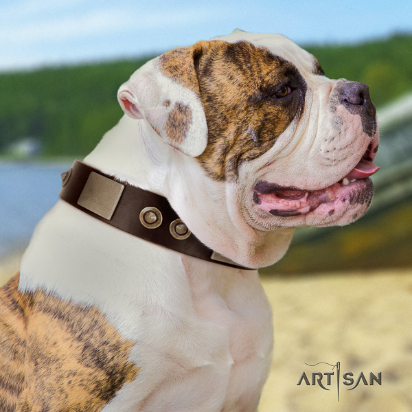 American Bulldog stylish walking full grain natural leather collar with embellishments for your four-legged friend
