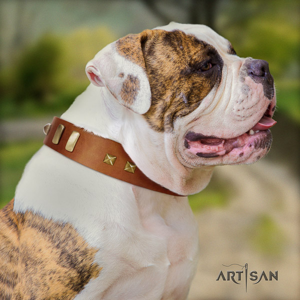 American Bulldog daily walking full grain leather collar with top notch embellishments for your dog