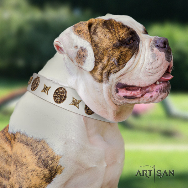 American Bulldog fancy walking natural leather collar with embellishments for your dog