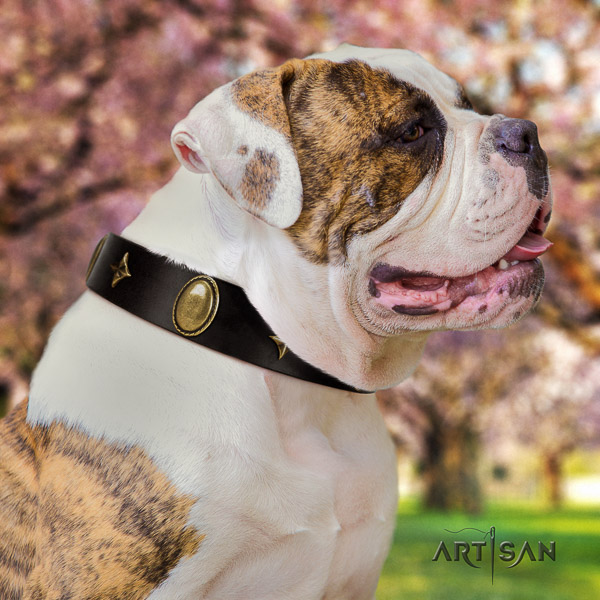 American Bulldog everyday walking leather collar with unusual embellishments for your dog