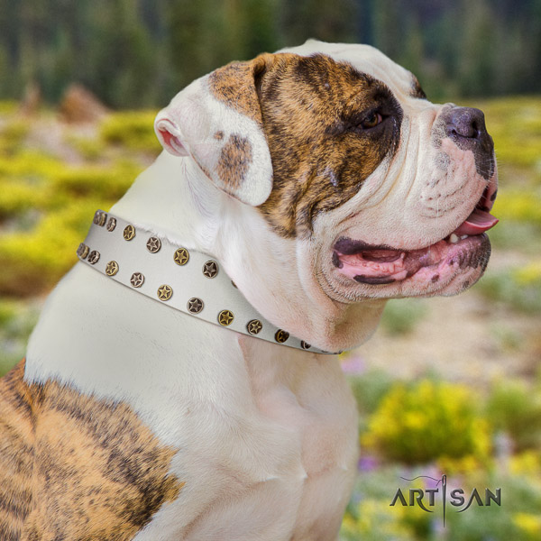 American Bulldog daily use genuine leather collar with stunning adornments for your doggie