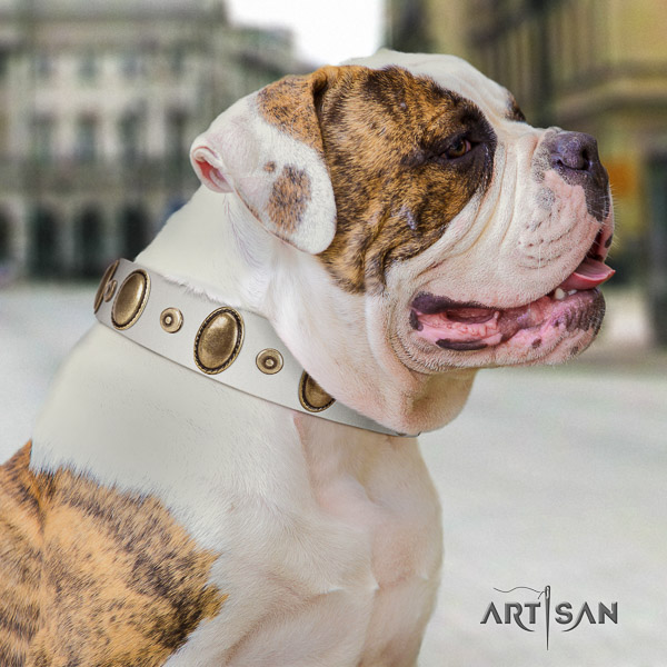 American Bulldog everyday walking genuine leather collar with remarkable adornments for your canine