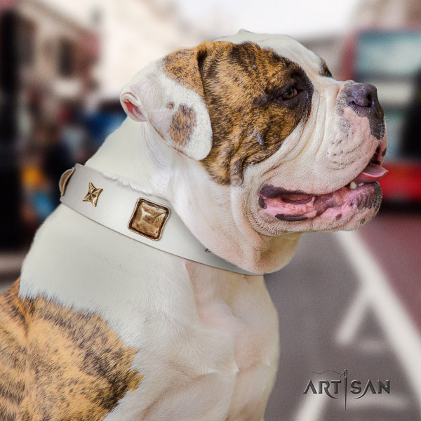 American Bulldog everyday walking full grain genuine leather collar with embellishments for your dog