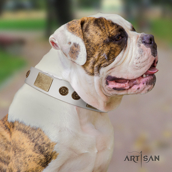 American Bulldog basic training natural leather collar with decorations for your dog