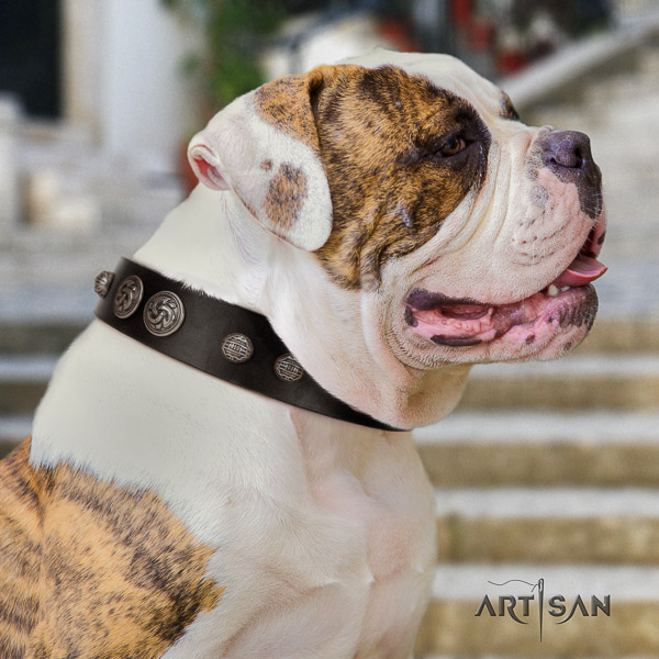 American Bulldog stylish walking leather collar with exquisite adornments for your pet