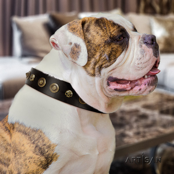 American Bulldog everyday use leather collar with exquisite embellishments for your four-legged friend