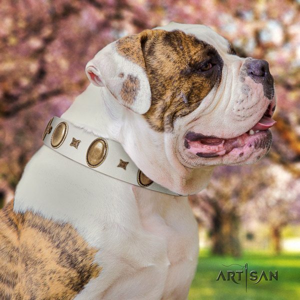 American Bulldog fancy walking genuine leather collar with fashionable decorations for your four-legged friend