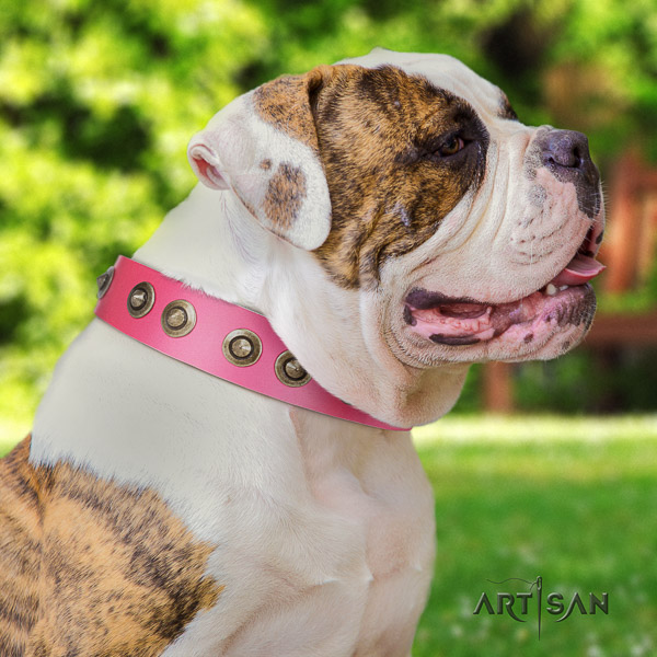 American Bulldog handy use full grain genuine leather collar with embellishments for your four-legged friend