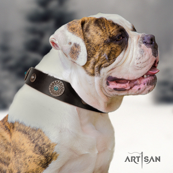 American Bulldog daily walking leather collar with fashionable embellishments for your four-legged friend