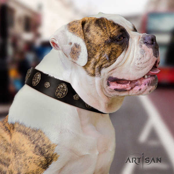 American Bulldog everyday use leather collar with adornments for your canine