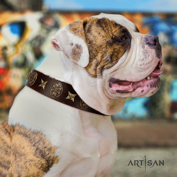 American Bulldog basic training genuine leather collar with studs for your dog