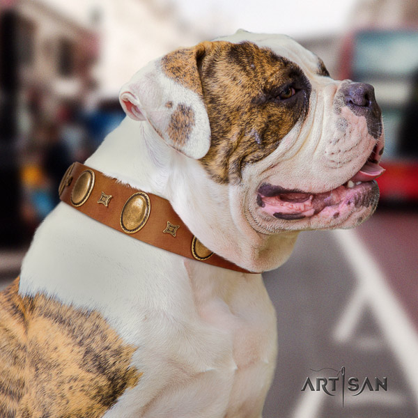 American Bulldog basic training leather collar with stylish embellishments for your doggie