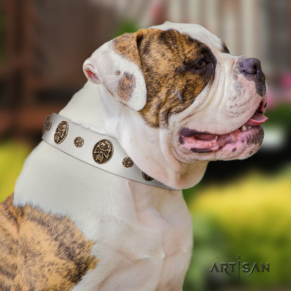 American Bulldog daily use natural leather collar with studs for your dog