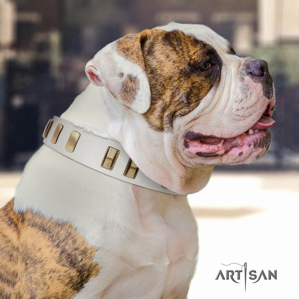American Bulldog daily walking full grain leather collar with remarkable embellishments for your pet