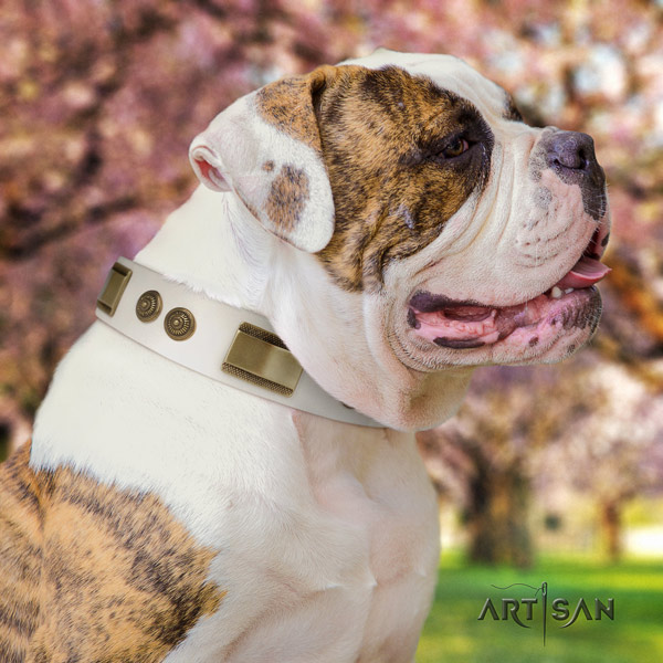 American Bulldog impressive leather dog collar with studs for everyday use