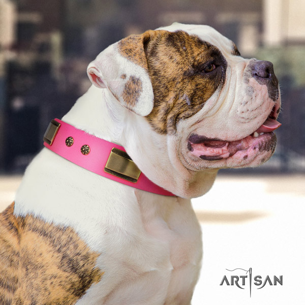 American Bulldog fashionable leather dog collar with decorations for walking