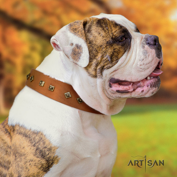 American Bulldog exceptional genuine leather dog collar with decorations for stylish walking