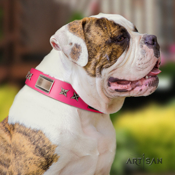 American Bulldog incredible leather dog collar with studs for daily walking