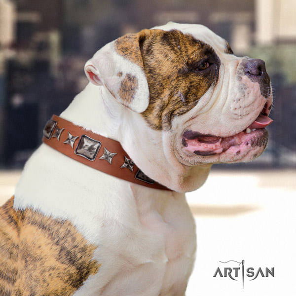 American Bulldog impressive genuine leather dog collar with embellishments