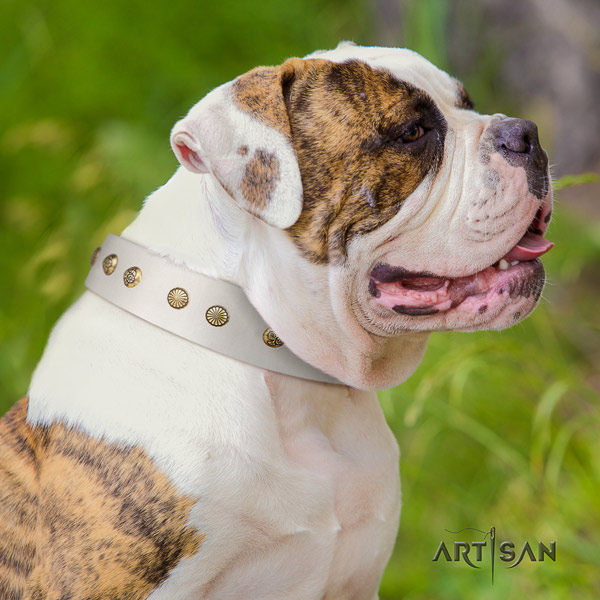 American Bulldog exquisite genuine leather dog collar with embellishments