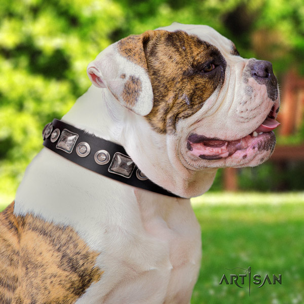 American Bulldog amazing leather dog collar with embellishments