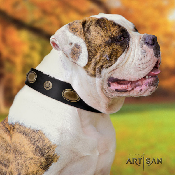 American Bulldog exceptional genuine leather dog collar with decorations for easy wearing