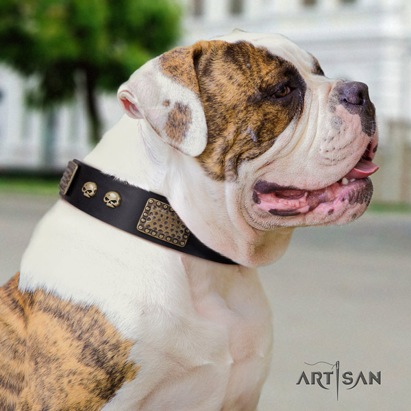American Bulldog amazing genuine leather dog collar with decorations for comfy wearing