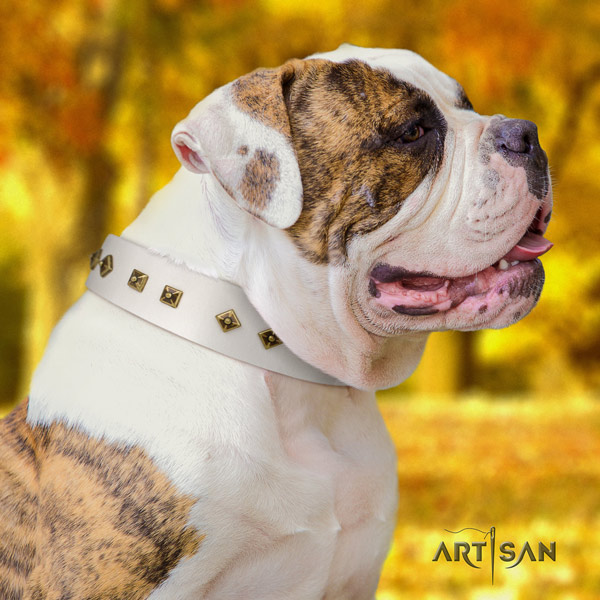 American Bulldog significant leather dog collar with adornments for comfortable wearing