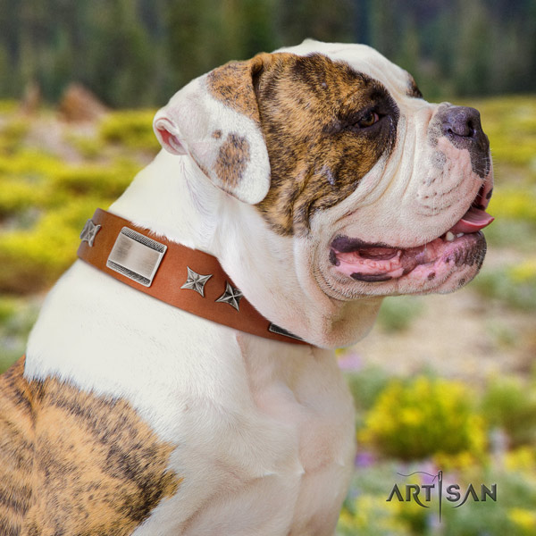 American Bulldog stylish design genuine leather dog collar with decorations for daily walking